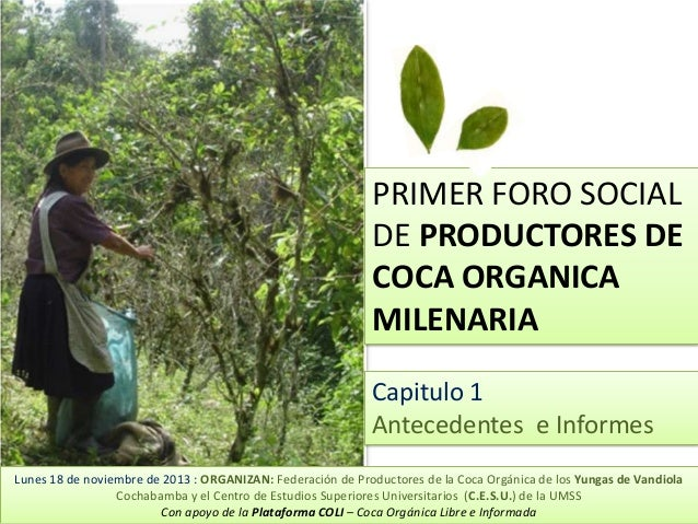 PRIMER FORO SOCIAL DE PRODUCTORES DE COCA ORGANICA MILENARIA Capitulo 1 Antecedentes e Informes Lunes 18 de noviembre de 2...