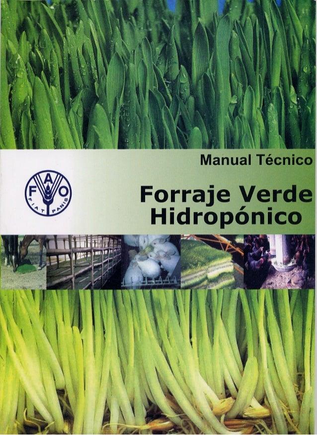 ORGANIZACIÓN DE LAS NACIONES UNIDAS PARA LA AGRICULTURA Y LA ALIMENTACION  MANUAL TECNICO  FORRAJE VERDE HIDROPONICO TCP/E...