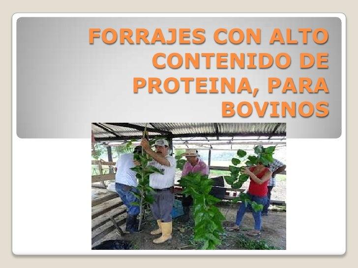 FORRAJES CON ALTO    CONTENIDO DE   PROTEINA, PARA          BOVINOS