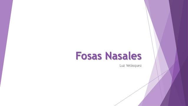 Fosas Nasales Luz Velásquez