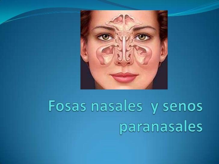 Fosas nasales y senos paranasales