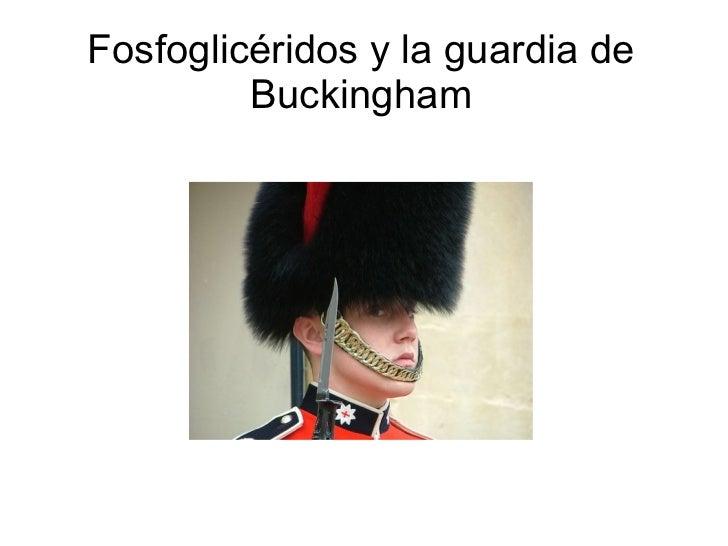 Fosfoglicéridos y la guardia de         Buckingham