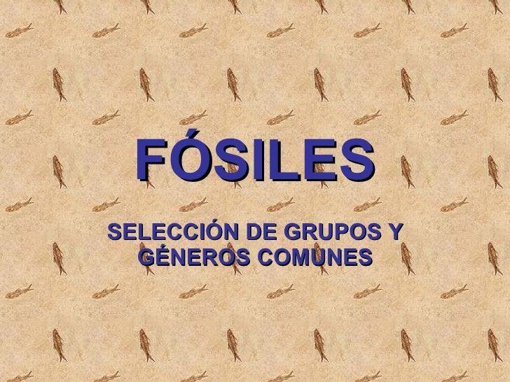 FÓSILES SELECCIÓN DE GRUPOS Y GÉNEROS COMUNES