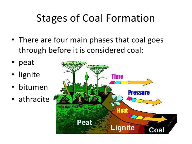 Coal formation stages