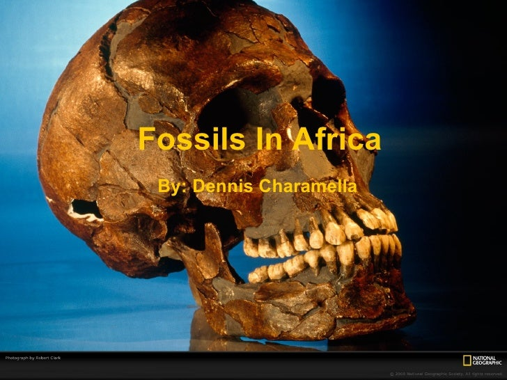 Fossils In Africa