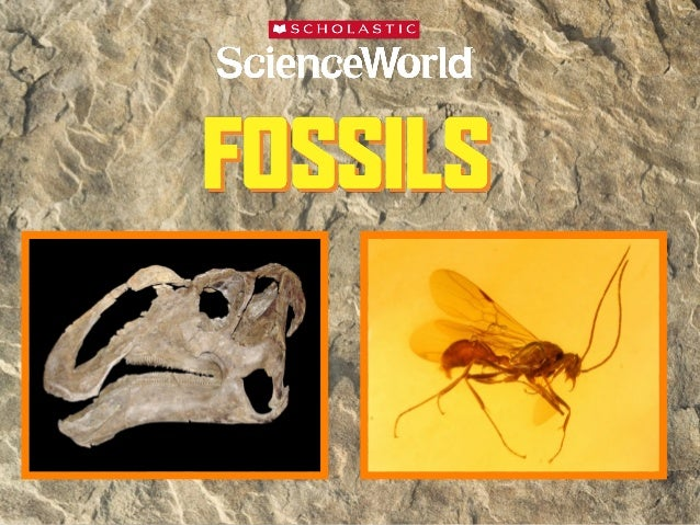 What is a fossil? •  A fossil is the preserved remains of a onceliving organism.  What do fossils tell us?  • Fossils give...