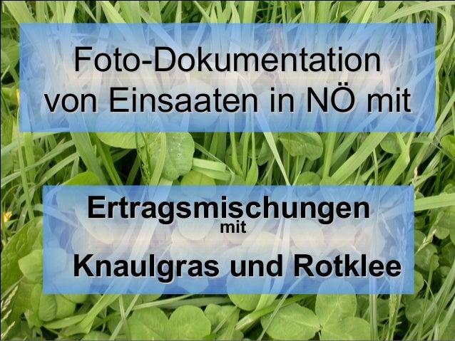 Foto-Dokumentation von Einsaaten in NÖ mit Ertragsmischungen mit Knaulgras und Rotklee