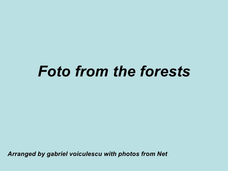 Foto from the forests Arranged by gabriel voiculescu with photos from Net