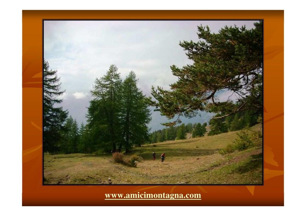 www.amicimontagna.com