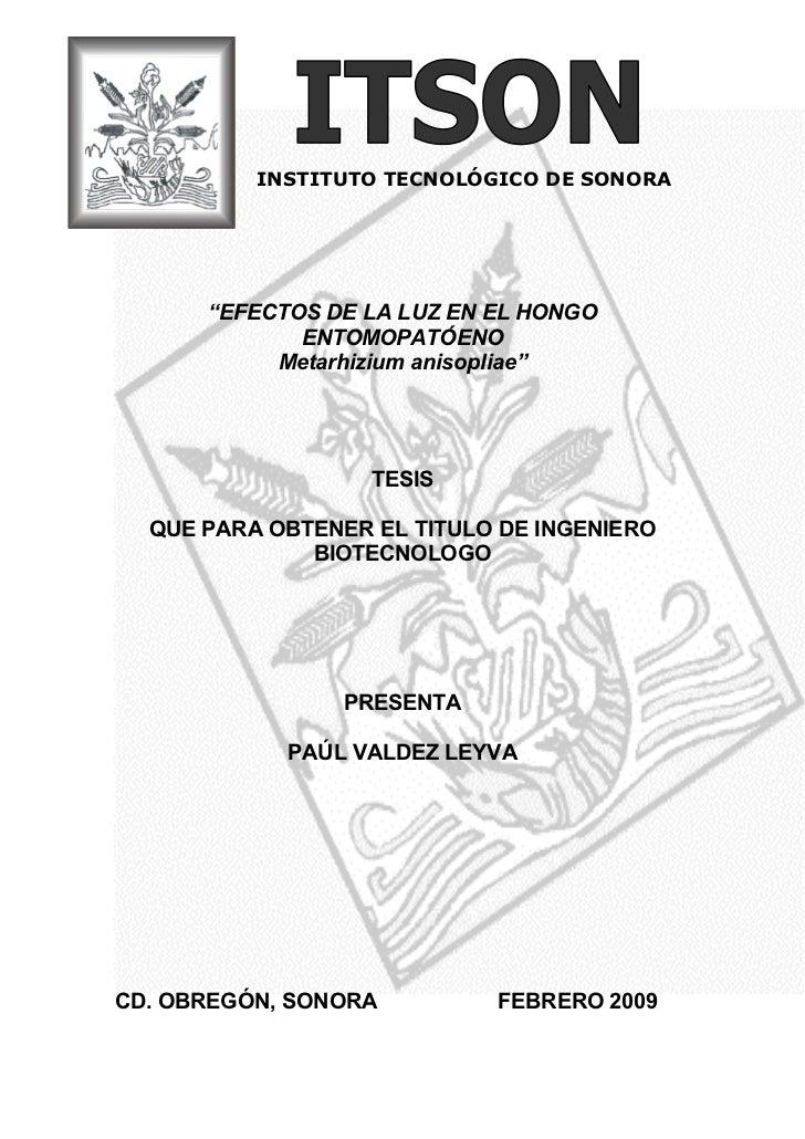 """INSTITUTO TECNOLÓGICO DE SONORA      """"EFECTOS DE LA LUZ EN EL HONGO             ENTOMOPATÓENO           Metarhizium anisop..."""