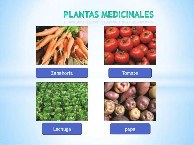 Variedades de plantas for Plantas medicinales y ornamentales
