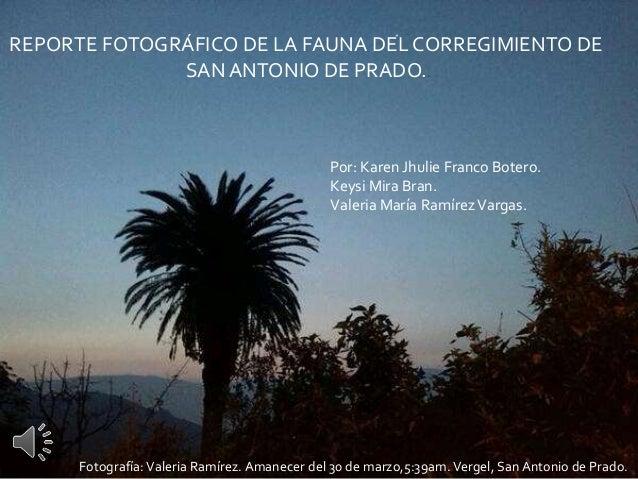 REPORTE FOTOGRÁFICO DE LA FAUNA DEL CORREGIMIENTO DE  SAN ANTONIO DE PRADO..  Por: Karen Jhulie Franco Botero.  Keysi Mira...