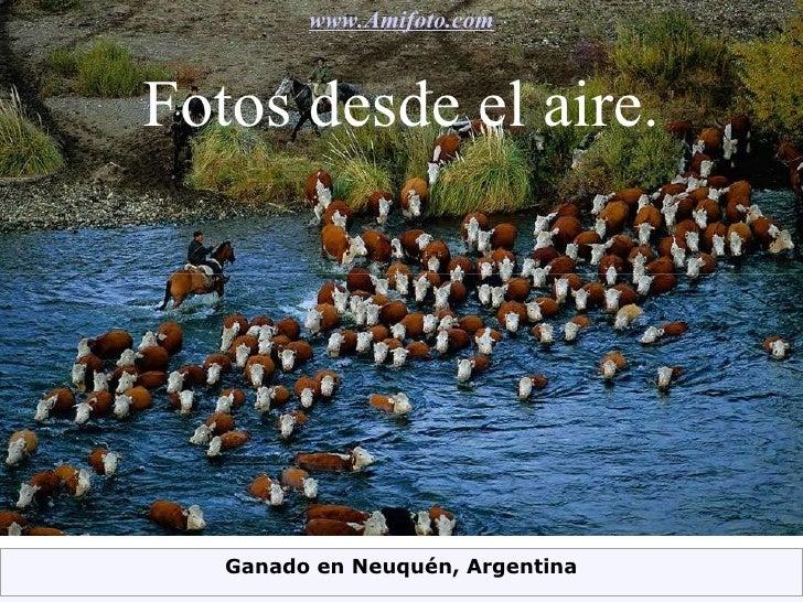 Fotos desde el aire. www.Amifoto.com Ganado en Neuquén, Argentina