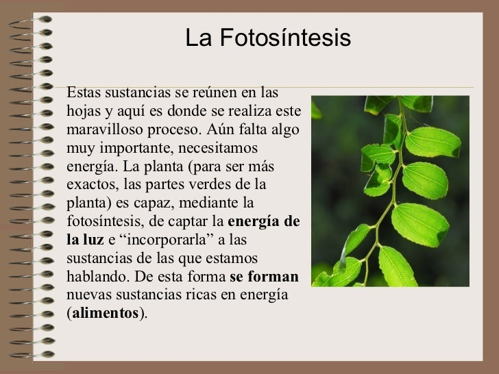 Fotosintesis for Para que se utilizan las plantas ornamentales