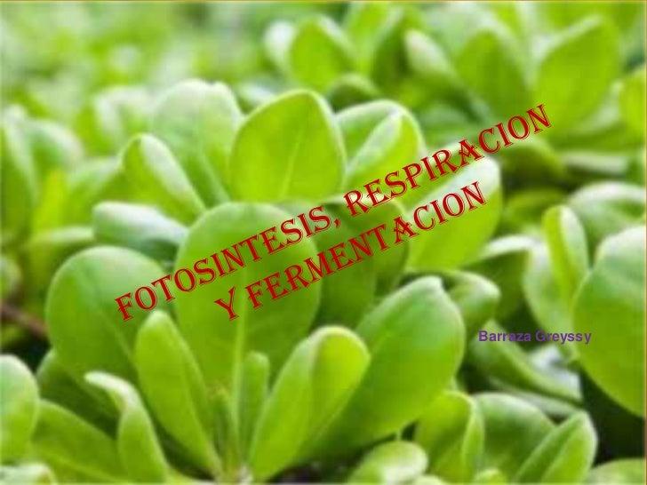 Fotosintesis y respiracion presentacion