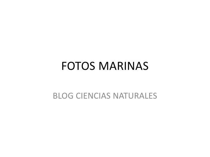 FOTOS MARINAS  BLOG CIENCIAS NATURALES