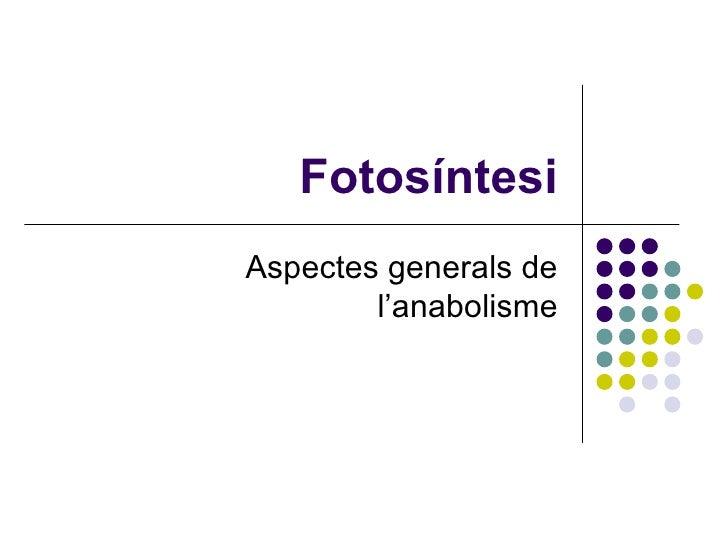 Fotosíntesi Aspectes generals de l'anabolisme