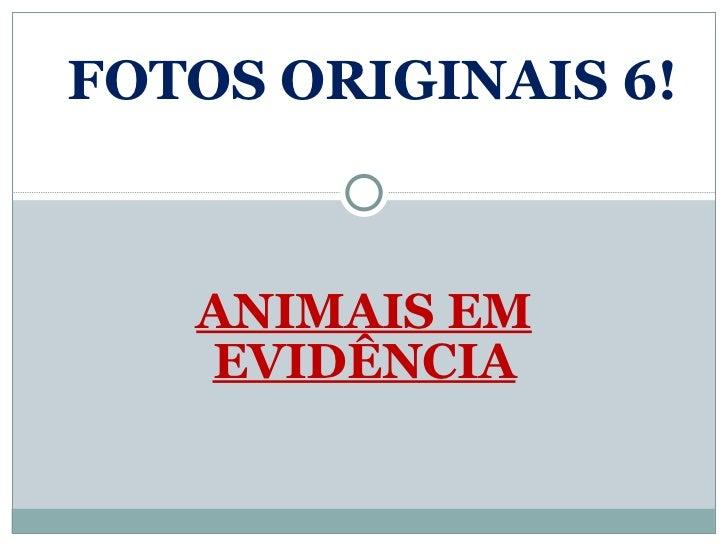 ANIMAIS EM EVIDÊNCIA FOTOS ORIGINAIS 6!