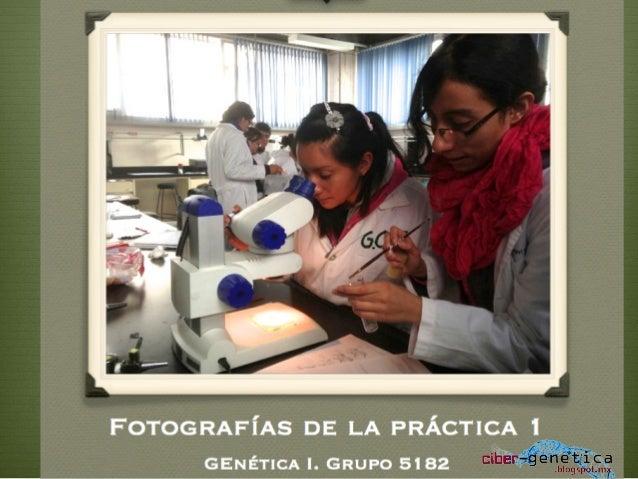 Fotografías de la práctica 1 grupo 5182_2014_1