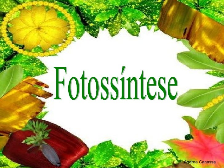 Fotossíntese Andrea Canassa