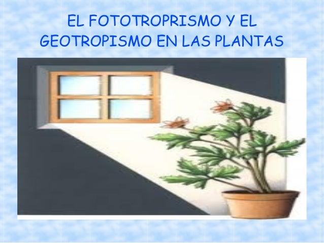Fototropismo y geotropismo experimento 1
