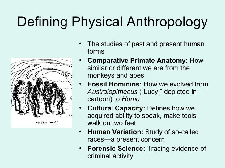 A List Of The Most Interesting Physical Anthropology Term Paper Ideas