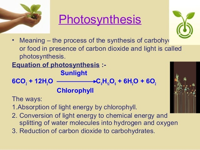 photosynthesis coursework essay Gain insight knowledge on the particular discipline with biology assignment help homework like scientific biology essays level biology assignment.