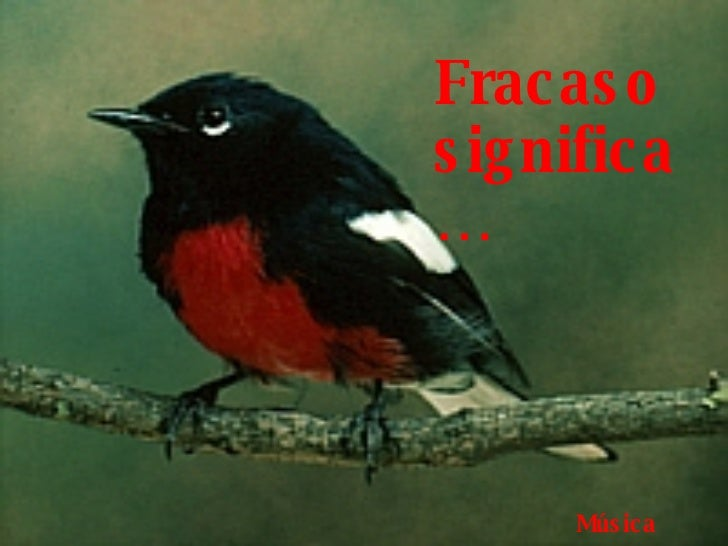 AdaliM Fracaso significa… Música