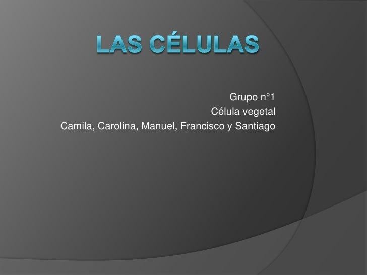 Las células<br />Grupo nº1<br />Célula vegetal <br />Camila, Carolina, Manuel, Francisco y Santiago<br />