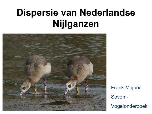 Dispersie van Nederlandse        Nijlganzen                   Frank Majoor                   Sovon -                   Vog...