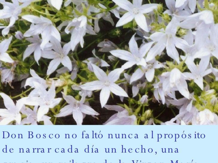 Don Bosco no faltó nunca al propósito de narrar cada día un hecho, una gracia, un milagro de la Virgen María