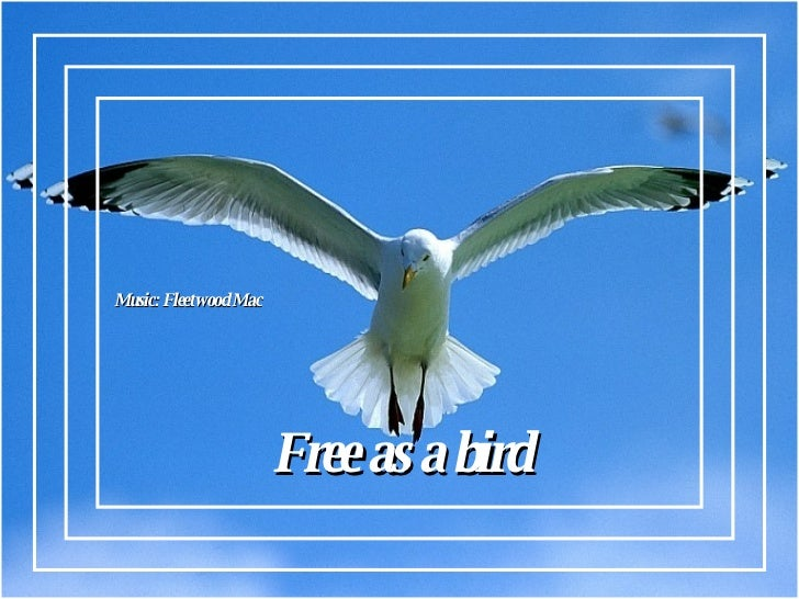 Free as a bird Music: Fleetwood Mac