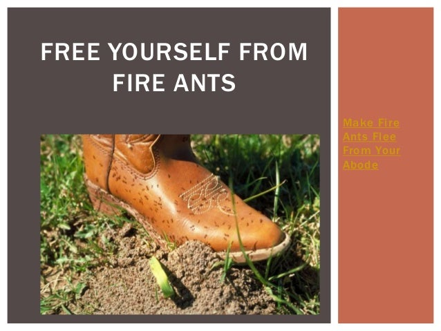 Make Fire  Ants Flee  From Your  Abode  FREE YOURSELF FROM  FIRE ANTS