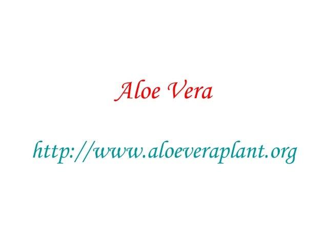 Aloe Vera http://www.aloeveraplant.org