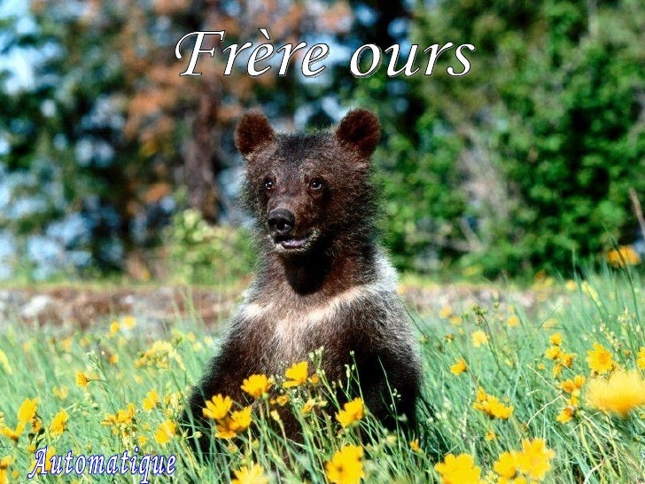 Frère Ours