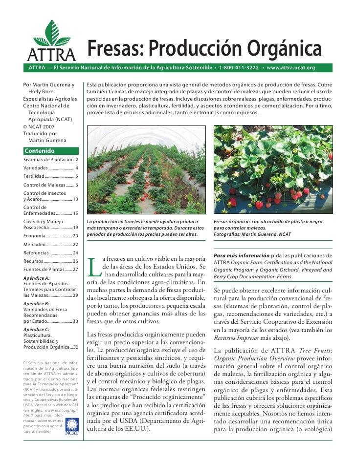 ATTRA                                    Fresas: Producción Orgánica   ATTRA — El Servicio Nacional de Información de la A...