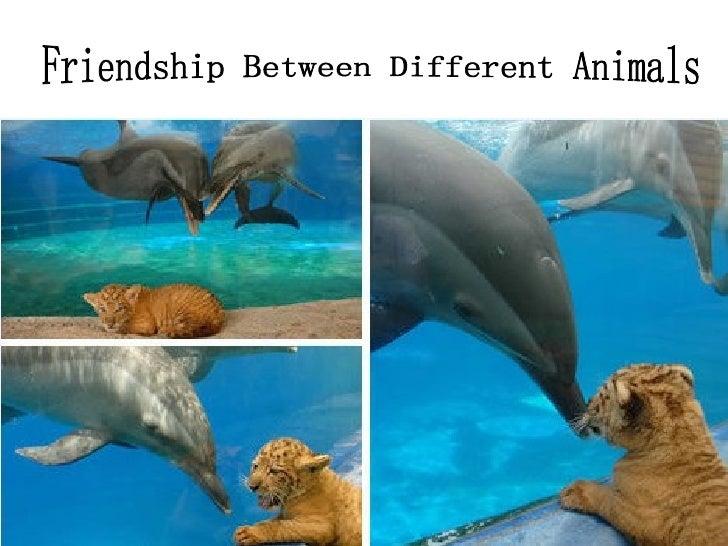 Friendship Between Different Animals