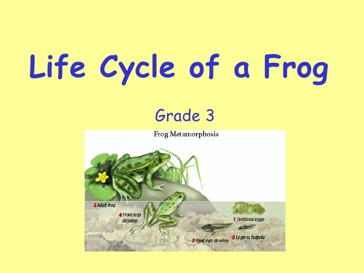Life Cycle of a Frog        Grade 3