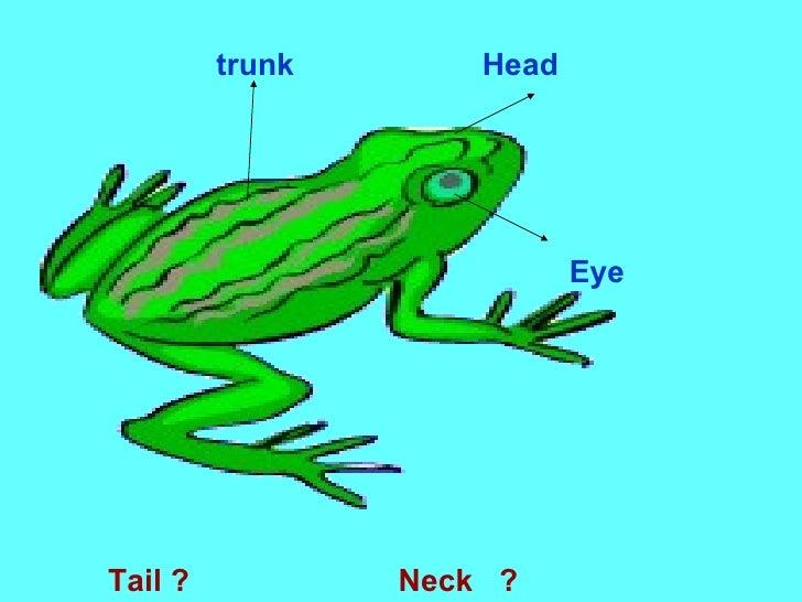 trunk Head Eye Tail ?  Neck  ?