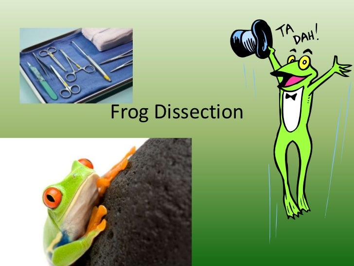 Frog Dissection<br />