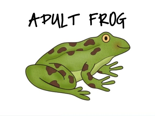 frog life cycle power point tadpole clipart free Frog Clip Art