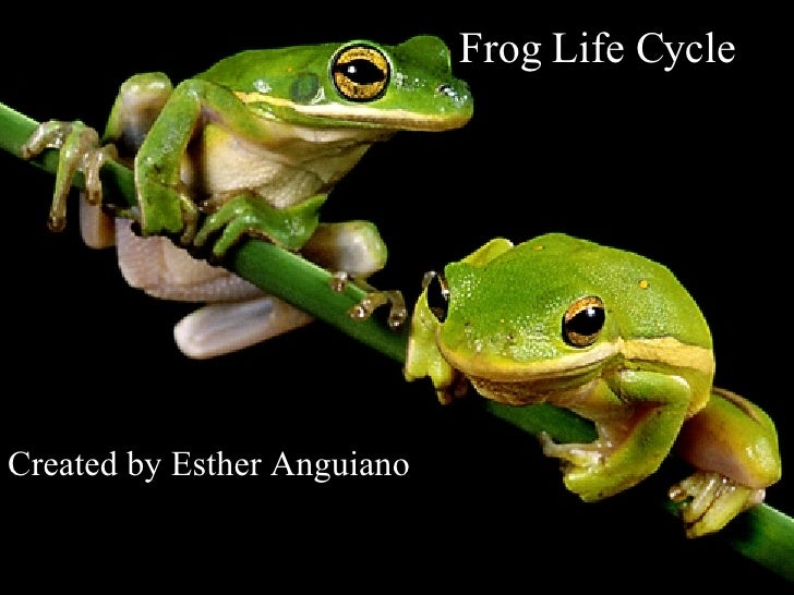 Frog Life Cycle Created by Esther Anguiano