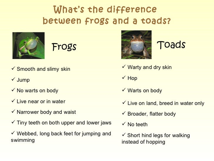 toads and toads revisited comparison essay