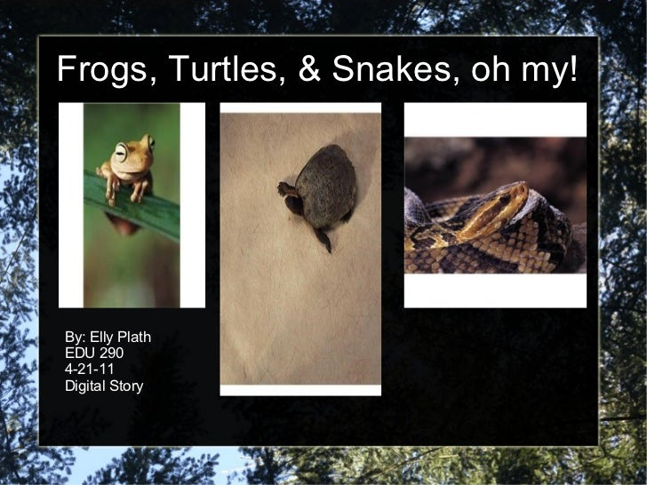 Frogs, Turtles, & Snakes, oh my! By: Elly Plath EDU 290 4-21-11 Digital Story