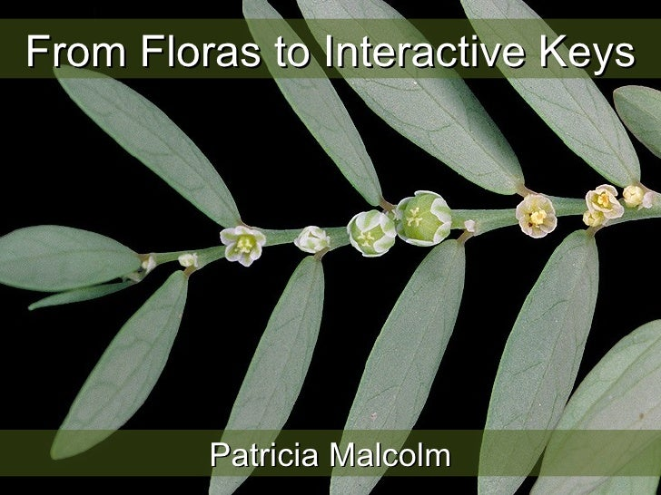 From Floras to Interactive Keys Patricia Malcolm