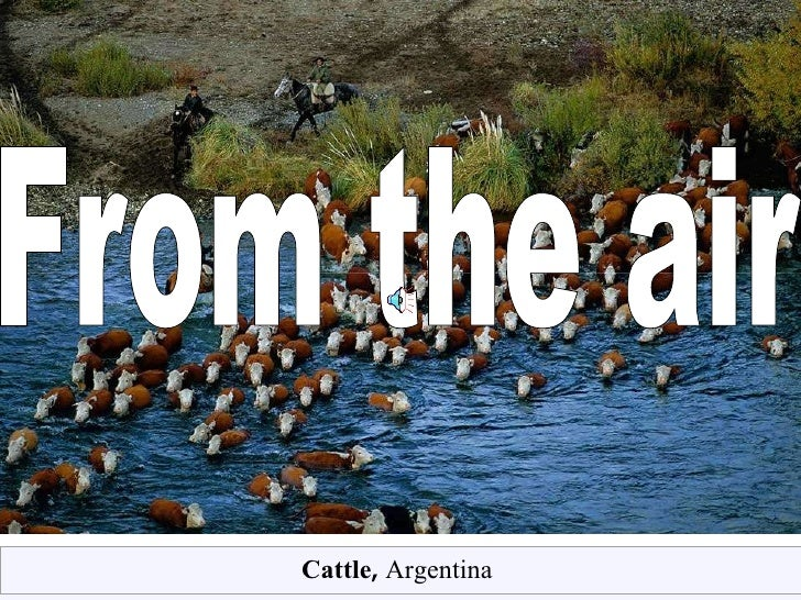 From the air Cattle ,  Argentina
