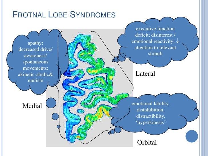 Orbital Prefrontal Circuit Orbital Prefrontal Cortex