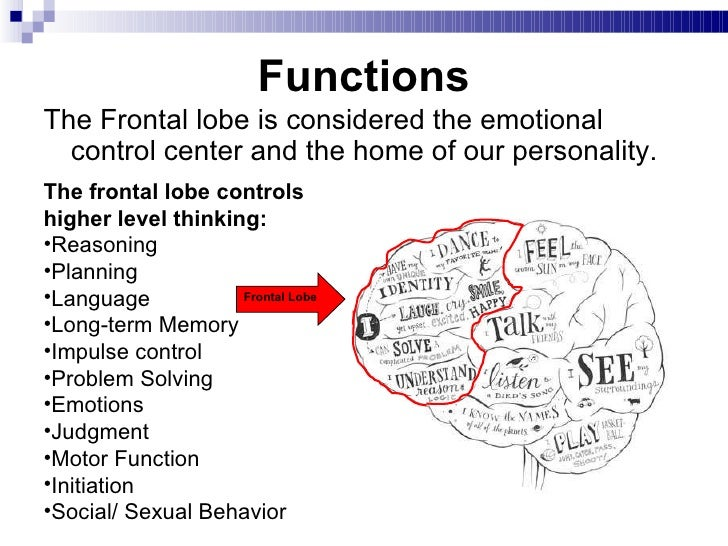 a study on the important role of the prefrontal cortex in the cognitive control of human beings Is the most commonly used test of cognitive flexibility in human beings  prefrontal cortex during cognitive  important role in the executive control.
