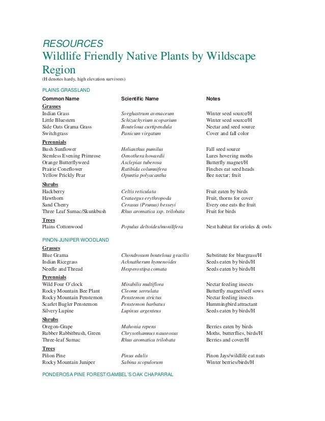 Wildlife Friendly Native Plants By Wildscape - Boulder, Colorado