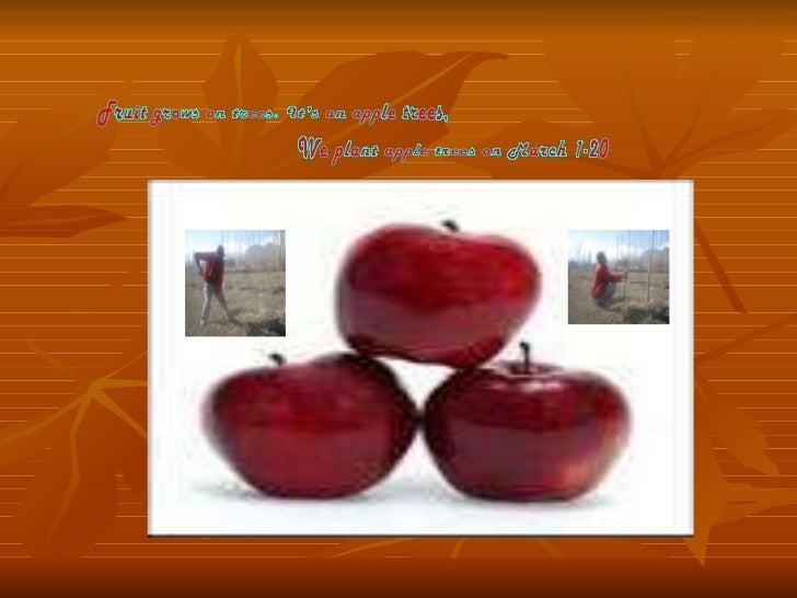 Fruit grows on trees tamara 8 th apples.